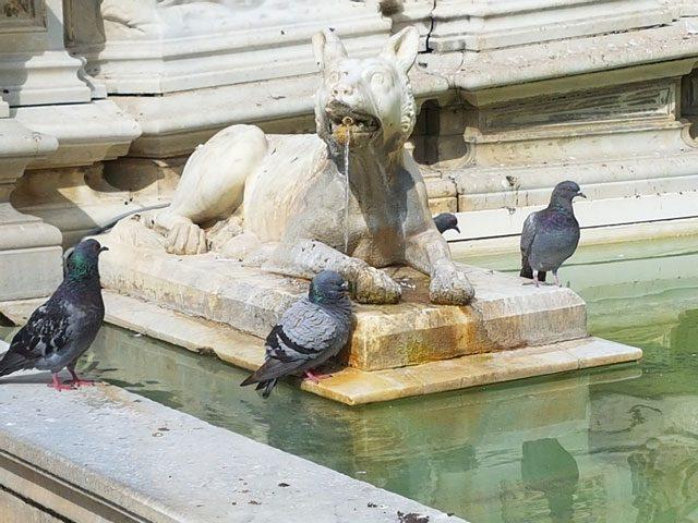 Ghid turistic - Emotional Siena
